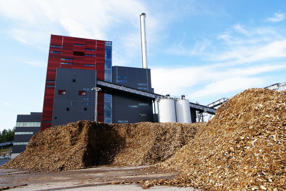 duża ilość troczyny oraz suszarnia do biomasy